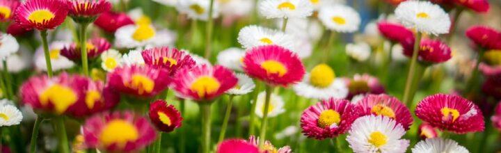 'Edenbridge in Bloom' Competition